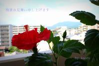 酷暑 - 京都ときどき沖縄ところにより気まぐれ