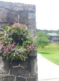 夏休み絵日記「花、そしてみみずくは黄昏に飛びたつ 」 - 海の古書店