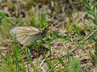 草原の風に翔ぶ蝶を追って(その13) - 不思議の森の迷い人