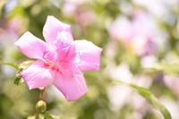 6月7月の花菜ガーデン☆彡 - 僕の足跡