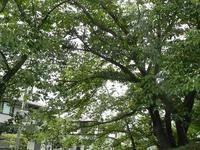庭の植物観察 - 心とカラダが元気になるアロマ&ハーブガーデン教室chant rose