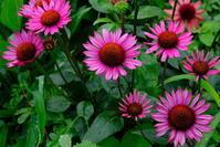 雨中のピンク - オムイと森羅万象