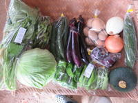 今週の野菜セット 8月2週目 - まるみど農園のあれこれ日記