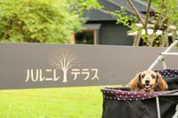 ハルニレテラス軽井沢 - 湘南気まま生活♪