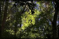 ちょっといろいろ - 森の扉