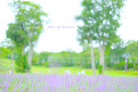 たんばらラベンダーパーク - Photographie de la couleur