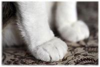 猫の手、猫の足 - nazunaニッキ