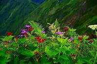 夏山の花々 - 風の香に誘われて 風景のふぉと缶