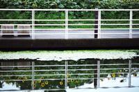 ひまわり 浜名湖ガーデンパーク - 笑顔が一番