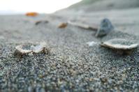 台風通過後の表浜 - Beachcomber's Logbook