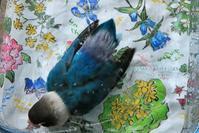 水浴びB.Bの記録 → (8月10日) - FUNKY'S BLUE SKY