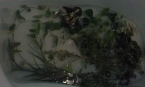 お墓参りと植物採集 -