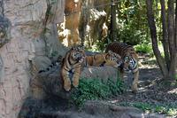 幸せな瞬間 - 動物園へ行こう