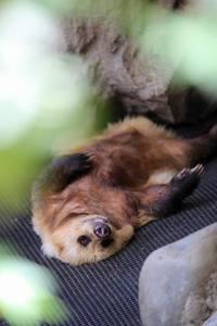 日本の夏は、 - 動物園のど!