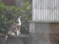 さつきちゃん物語(3) - 愛犬家の猫日記
