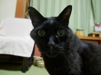 夏は小顔で男前になるオトコ - ご機嫌元氣 猫の森公式ブログ