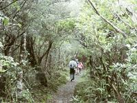 まだ見えず - いい旅・夢Kiwi スカイキウィの夢日記