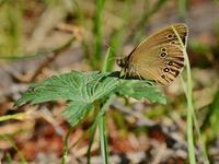 草原の風に翔ぶ蝶を追って(その14) - 不思議の森の迷い人