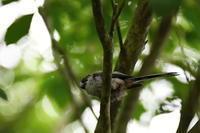 西湖野鳥の森公園④ - Buono Buono!