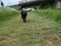 ジェード草刈りしたよ - 黒ラブJADEとランクル40