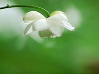 赤塚植物園の花 - いや、だから 姉ちゃん じゃなくて ネイチャー・・・
