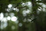 驟雨の記憶 ~吾妻山~ - 鴉の独りごと