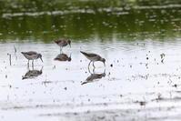 休耕田にて - 私の鳥撮り散歩