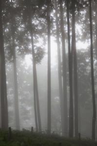 霧の中に咲く - 光の贈りもの