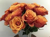 Rose (バラ) - ファルマウスミー