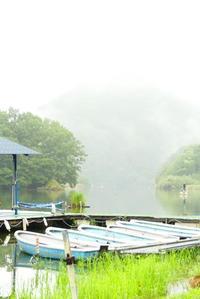 霧雨の相模湖 - 西多摩探鳥散歩