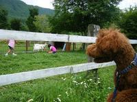 牧場でヤギと遭遇 @ 鷹山ファミリー牧場 - shoot !!