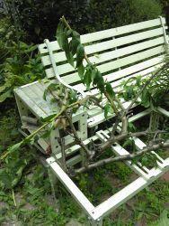太い枝と闘い疲れた - うまこの天袋