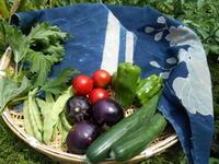 頂き物の夏野菜(ほんの一部)・・・ゴーヤ佃煮、北信の郷土料理「丸ナスのおやき」お盆なので - 藍ちくちく日記