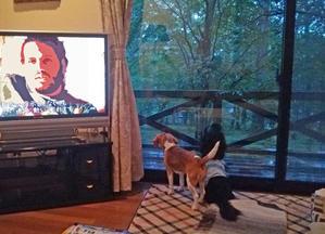 テレビに大騒ぎ -