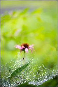 レインドレス - 花のこみち