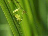虎視眈々 - M2_pictlog