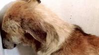 復活犬 4 - 風流荘風雅屋