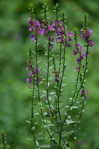 季節の花♪ - 花・tuzuri
