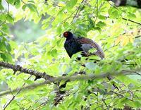 八ヶ岳付近(その4)・・・ - 一期一会の野鳥たち