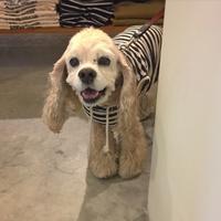 Hello Tabasa! - Doggie Do!! / good dog and hello cat !!