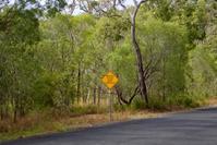 夏休みオーストラリア旅行: ウォレス線を体感しよう! - 世話要らずの庭