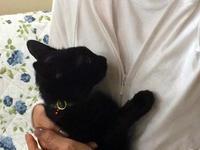 黒猫君お見合い致しました! - 小さな森のキキとサラ