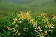 谷川岳 山の花 - 風の香に誘われて 風景のふぉと缶