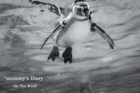 空飛ぶペンギン - ON THE WIND  *mummy's Diary