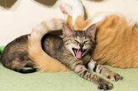 猛獣の曲芸 - 猫と夕焼け