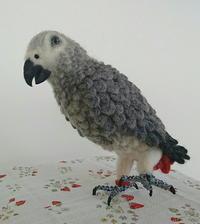 鳥さん写真(ヨウム) - fantasyplanet blog