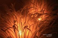 穂のあかり - ある日の足跡