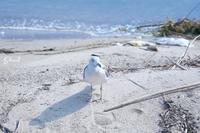 fujifilm X-E2~seagull~ - Bonjour! 二眼レフ
