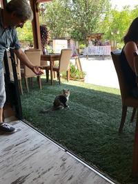 ワイルドな猫カフェ/トルコ料理教室 - カッパドキアのデイジーオヤ・キリムバッグ店長日記