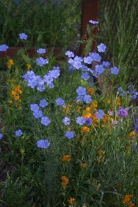 Wild flower garden - Casa de NOVA in Minnesota